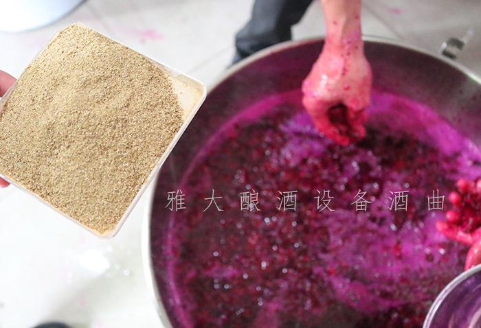 11.16-火龙果酿酒5-称酒曲34