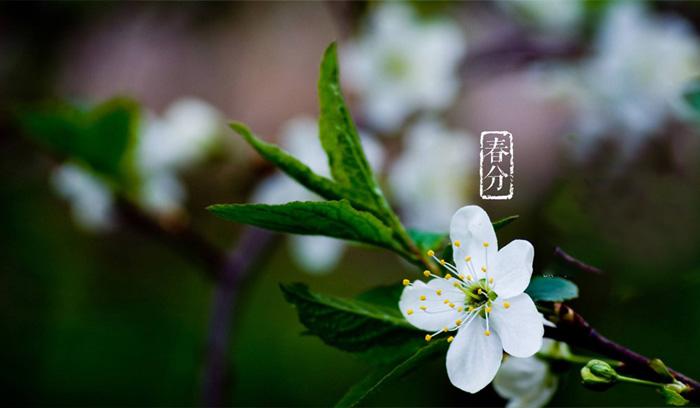 3.20春分时节,粮食与微生物开始了浪漫的恋爱之旅
