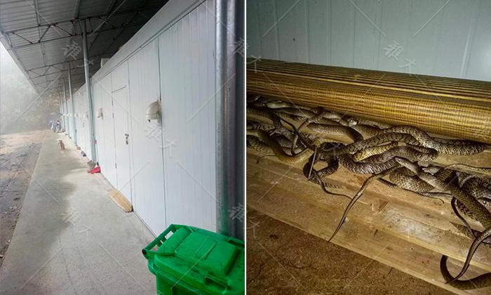 913覃总的养蛇场