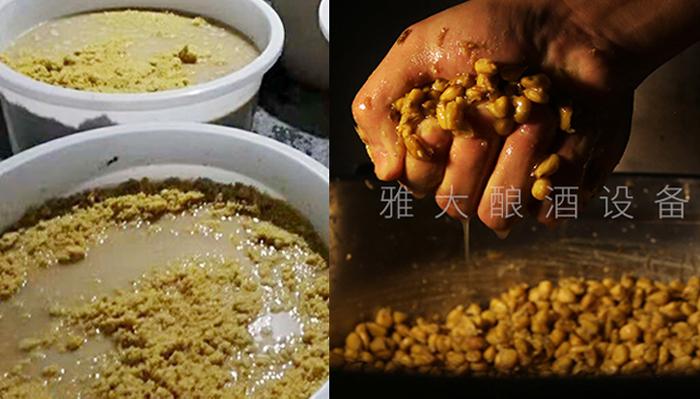8.11玉米固态工艺和液态工艺对比