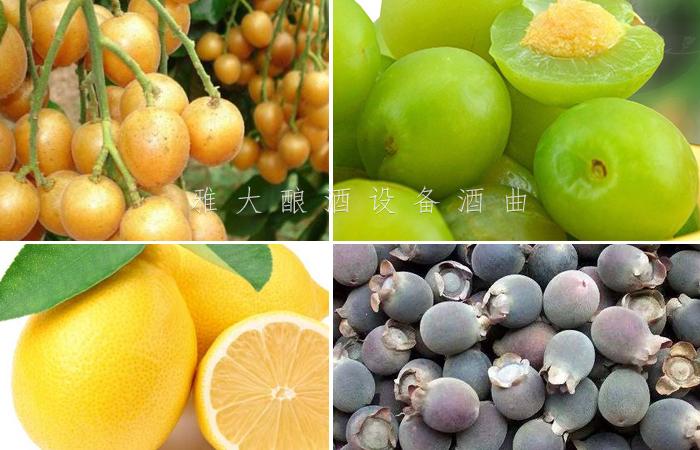 9.10利用当地丰富的水果资源酿酒