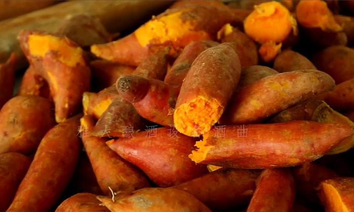9.10用做酒设备酿造红薯酒