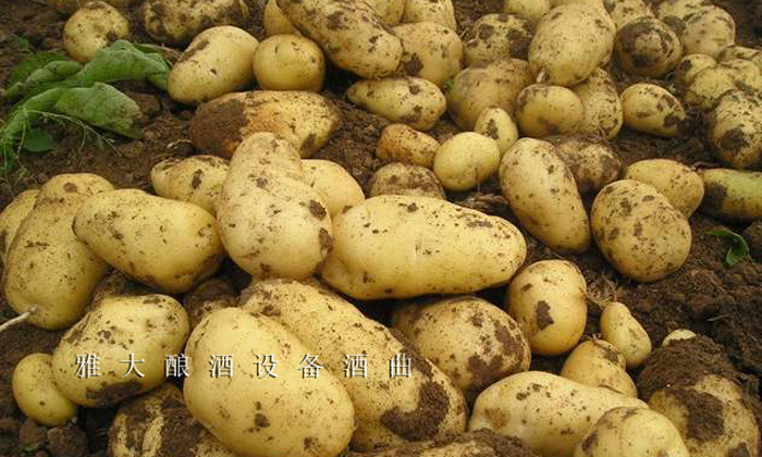 10.3将马铃薯酿成酒可有效解决马铃薯滞销