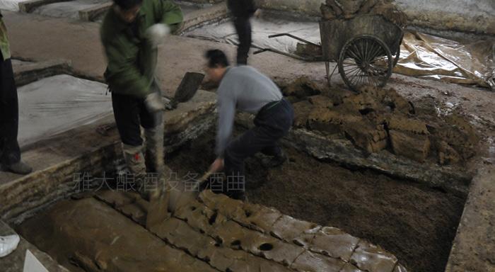 10.6双轮底发酵泥窖中微生物菌群丰富