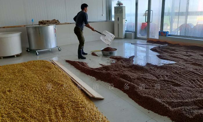 11.6张哥正在做高粱酒和玉米酒