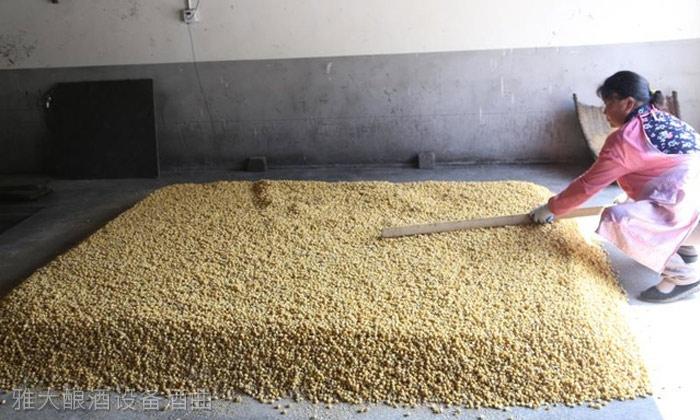 3.31整粒固态玉米酒的酿制方-糖化