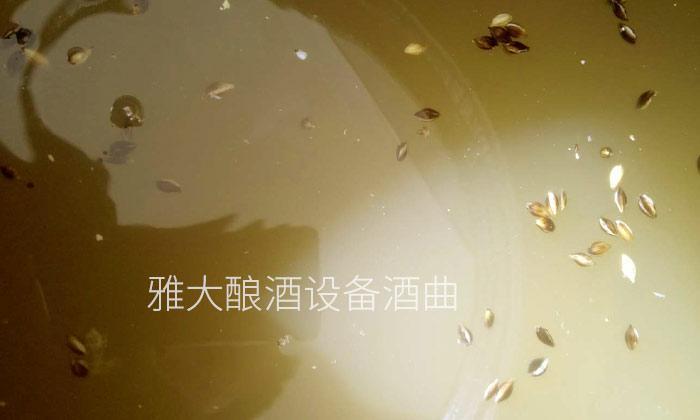 2.10黑大麦酿酒技术—发酵完成