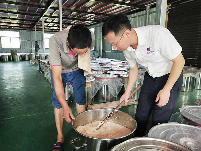 蒋总检查大米发酵情况