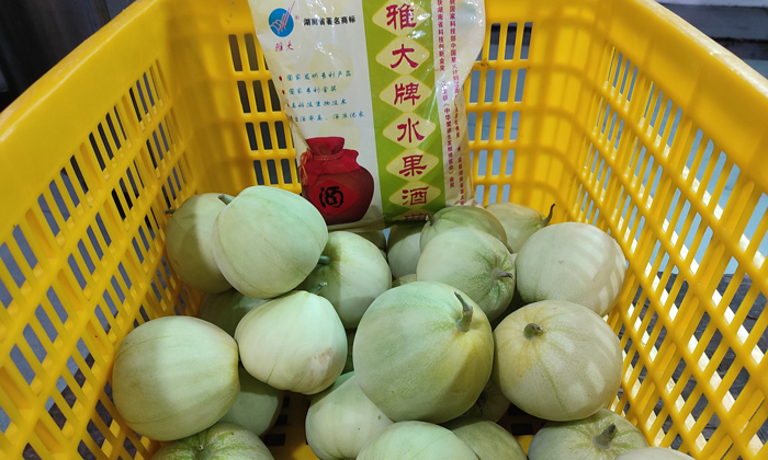 5.19谭总带过来的香瓜