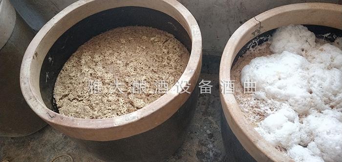 9.16无花果酿酒技术-发酵