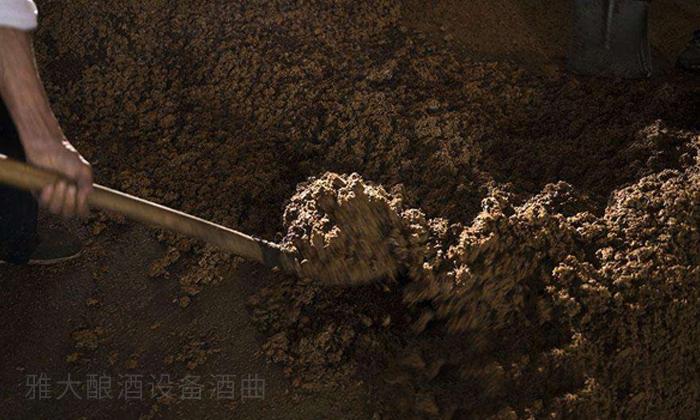 9.19发酵好的玉米酒醅 玉米酿酒技术