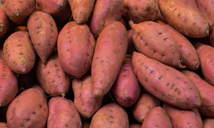 24-红薯酿酒技术-准备原料