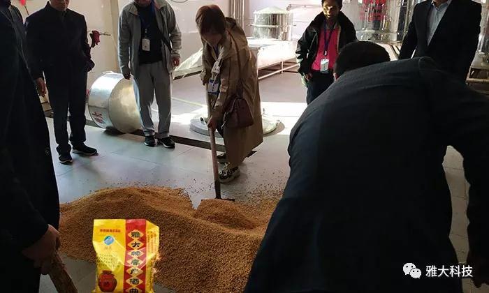 小麦酿酒加入雅大高产酒曲