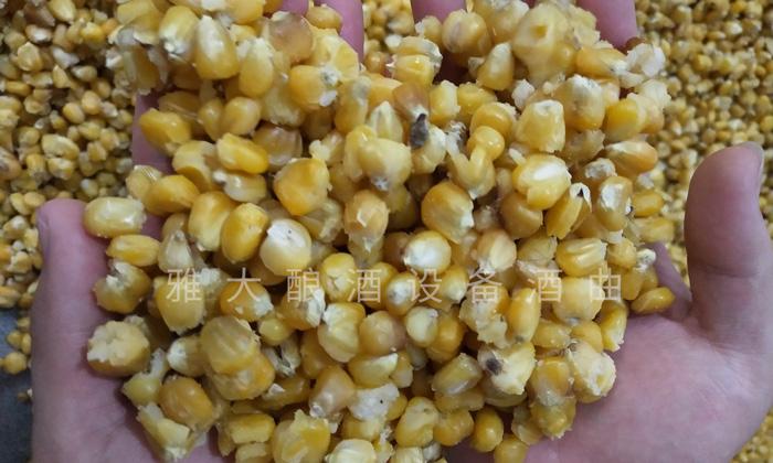 9.12玉米酿酒技术-蒸至开花率95%以上