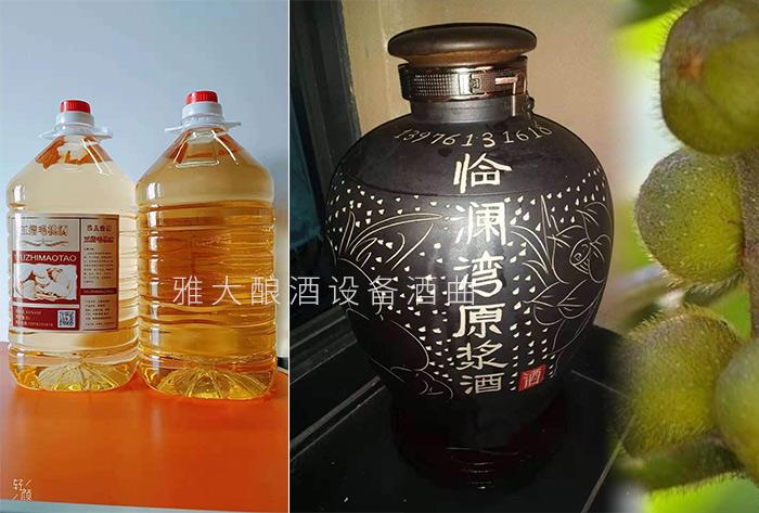 1.9五指毛桃散酒及定制酒