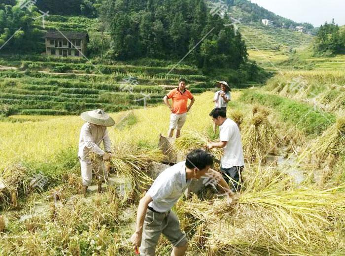 7.10现代农业特色(紫米)产业示范园