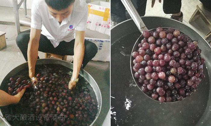 12.24雅大秋季教学员酿造葡萄酒