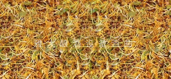 5.13金银花
