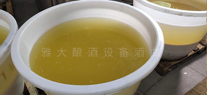 5.13发酵好的金银花糯米酒