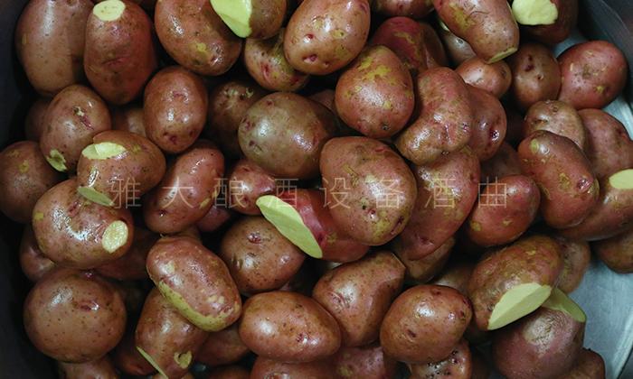 土豆酿酒技术-清洗完成