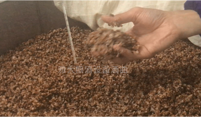 3.9高粱发酵