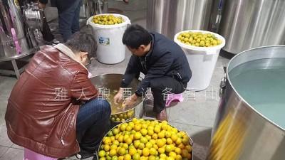 将几十万斤黄帝柑次果直接扔掉 看雅大小型蒸酒设备如何变废为宝