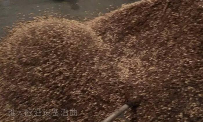 12.18高粱酿酒增加投粮量