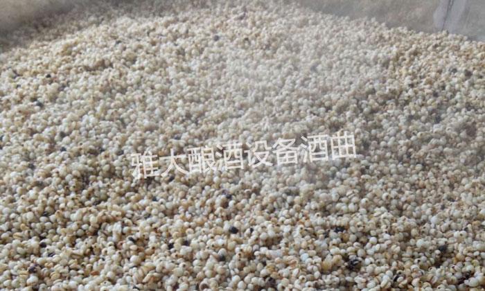 9.16刚刚用中型酿酒设备蒸好的薏米