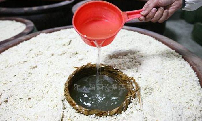 12.25大米酿酒技术-加水发酵