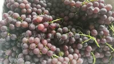 民间葡萄酒酿造潮再度兴起,赶紧恶补下葡萄酿酒知识