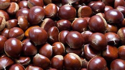 又到吃板栗的季节,可你知道怎样用做酒设备酿造板栗糯米酒吗?
