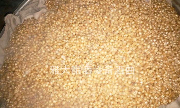 9.4古老的小麦配糟固态工艺-闷粮