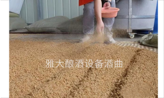 9.4古老的小麦配糟固态工艺-摊凉 下曲