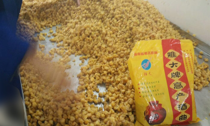 用雅大高产酒曲酿造的玉米酒品质稳定
