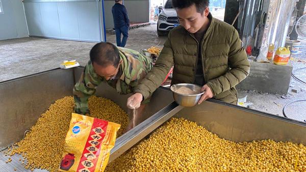 种粮+大型酿酒设备酿酒+养殖,村民收入三份钱!