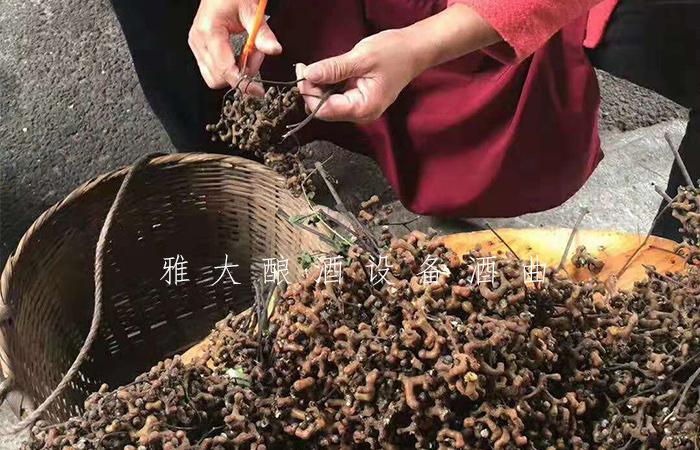 10.11拐枣酿酒技术-原料处理