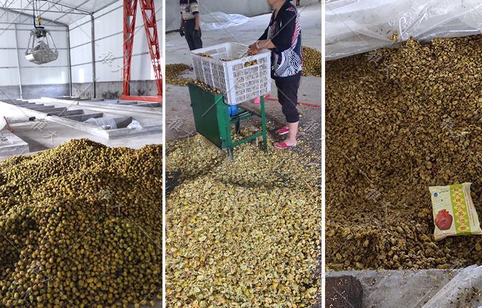 95 蒋老师正在指导酒厂员工酿刺梨酒