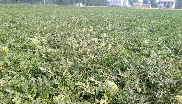 11.9农村创业好项目—农作物种植