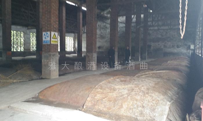 98泥窖发酵