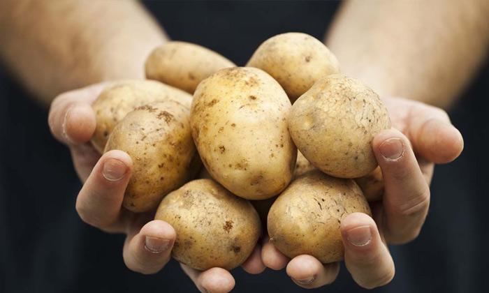 10.21土豆酿酒技术-原料选择