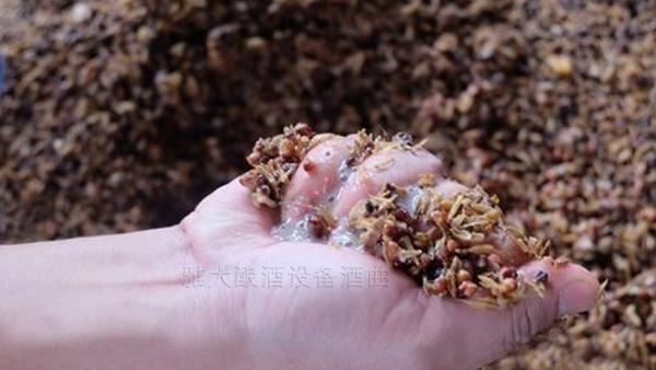 7.4高粱酿酒技术-检查发酵情况